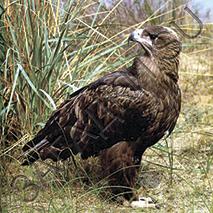 Загадки про орла, орлов ответы на загадку об орле.