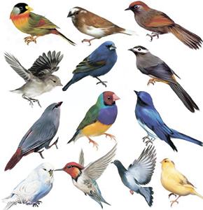 Загадки про птиц www.Загадки.su