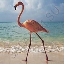 Загадки про фламинго
