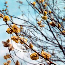 Загадки про апрель
