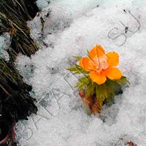 Загадки-про-весну