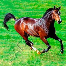 Загадки про коня
