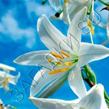 Загадки про лилию