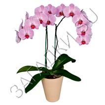 Загадки про орхидею