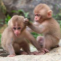 Загадки про обезьян