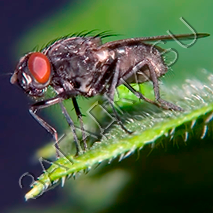 Загадки про муху