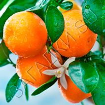 Загадки про апельсин