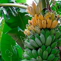 Загадки про банан