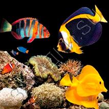 Стихи про рыб