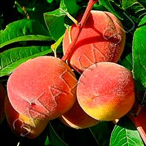 Загадки про персик