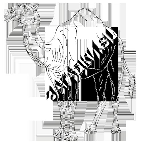 Раскраски верблюда
